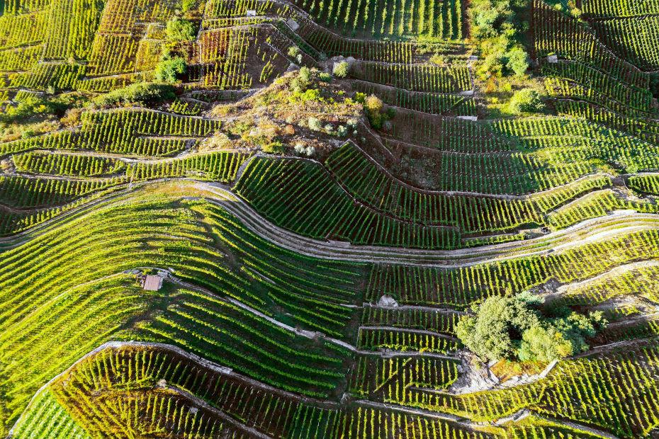 Strada del Vino e dei Sapori della Valtellina
