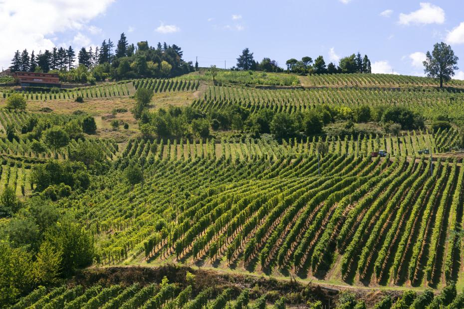 Strada del Vino e dei Sapori dell'Oltrepò Pavese