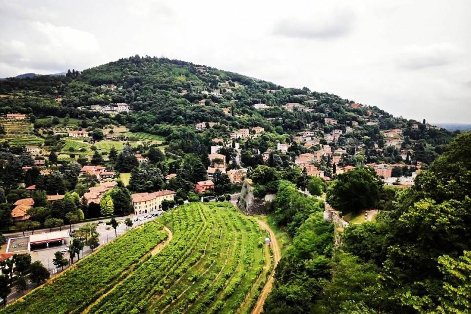 Strada del Vino Colli dei Longobardi