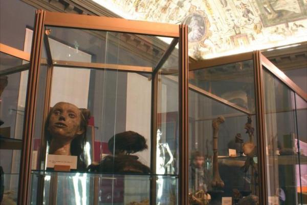 Collezione Anatomica Paolo Gorini - Teste